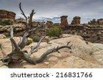 Dead Juniper Tree On The Edge...