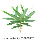 bamboo leaves isolated on white ... | Shutterstock . vector #216863170