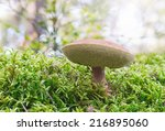 Boletus mushroom in green moss during a sunny day, Sweden - stock photo