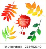 Vector Watercolor Autumn Leaves ...