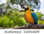 Blue   Gold Macaw   Ara Ararauna