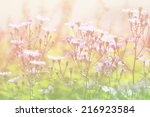flowers soft focus with pastel... | Shutterstock . vector #216923584
