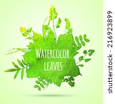watercolor leaves vector... | Shutterstock .eps vector #216923899