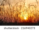 a view of the sunset through... | Shutterstock . vector #216940273