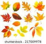 autumn leaves collage isolated... | Shutterstock . vector #217009978