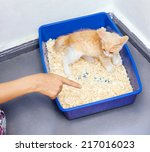 Young Cat Use The Toilet Pan...