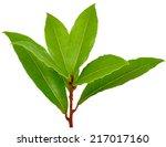 bay leaves  | Shutterstock . vector #217017160