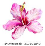 Single Beautiful Hibiscus...