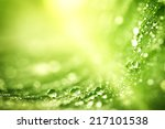 Beautiful Green Leaf With Drop...