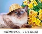Cute Siamese Kitten Wearing...