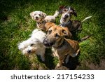 Stock photo dogs 217154233