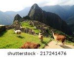 Stock photo llama at machu picchu in peru 217241476