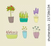 pot plants with flowers and... | Shutterstock .eps vector #217286134