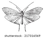 caddisfly  vintage engraved... | Shutterstock .eps vector #217316569