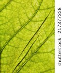 macro of light green leaf | Shutterstock . vector #217377328