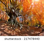 colorful autumn landscape in... | Shutterstock . vector #217478440