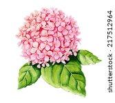 pink hydrangea on white... | Shutterstock . vector #217512964