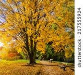 Beautiful Autumn Scene In Park...
