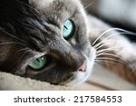 Smart Look Green Eyed Cat Lying