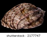 tropical sea shell  with...   Shutterstock . vector #2177747
