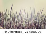 Summer Field With Golden Wheat...