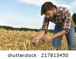 young farmer inspecting crop ...