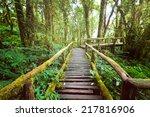 Jungle Landscape. Wooden Bridg...