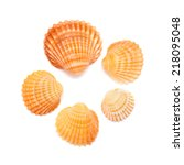 Small Cockle Shells Isolated O...