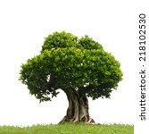Bonsai Tree In Garden Isolated...