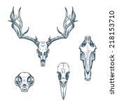 Animal Skulls Set Isolated On...