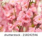 sweet spring blossoms | Shutterstock . vector #218242546
