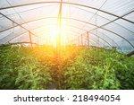 vegetables grow in the...   Shutterstock . vector #218494054