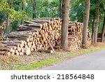 Freshly Cut Tree Logs Piled Up...