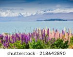 Постер, плакат: Lupins on the shore