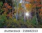 Sun Burst In A Colorful Aspen...