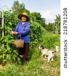 Small photo of Gadener pic up cow-pea with her dog around.