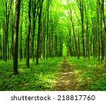 forest   Shutterstock . vector #218817760