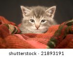 Stock photo kitten resting on red blanket 21893191