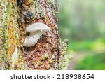 Small mushroom on a tree with resin dripping. Sweden - stock photo