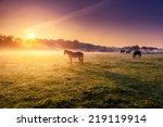 arabian horses grazing on... | Shutterstock . vector #219119914