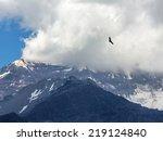 condor looks for prey. ... | Shutterstock . vector #219124840