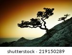 tree and sea at sunset. crimea... | Shutterstock . vector #219150289