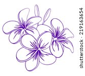 beautiful hand drawn plumeria... | Shutterstock .eps vector #219163654