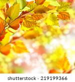 autumn foliage | Shutterstock . vector #219199366