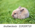 Stock photo little rabbit on green grass 219209719
