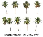Stock photo difference of coconut tree isolated on white 219257599