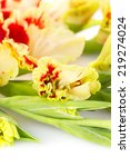 Fresh bright red and yellow gladiolus isolated on white background \ vertical - stock photo