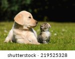 Stock photo cat and dog 219525328