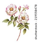 botanical wild  rose flower... | Shutterstock . vector #219558478