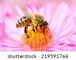 The European Honey Bee  Apis...